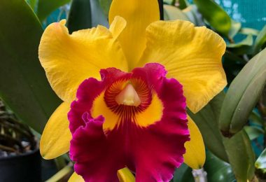 photo-cattleya-plante-interieur